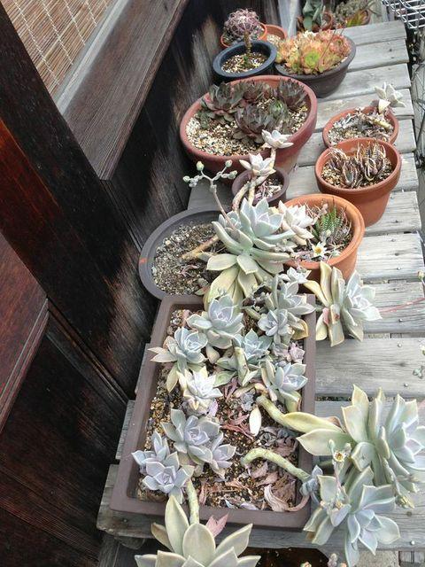succulentss.jpg